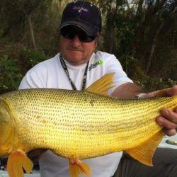 Lo ideal es pescar con carnada natural y tanto anclado como al garete.
