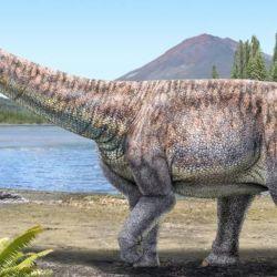 El hallazgo de este fósil se realizó en los 90.