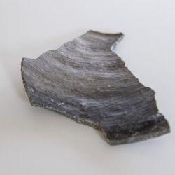 Los arqueólogos encontraron 30 pilotes de madera prehistóricos que alguna vez sostuvieron casas y 5 piezas de cerámica.