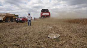 Pérdidas en cosecha de soja