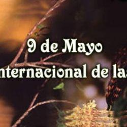 Cada 9 de mayo, las aves tienen su  merecido homenaje.
