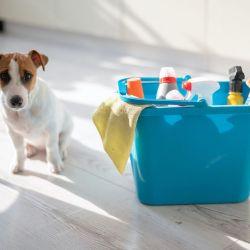 Tras el paseo, es fundamental desinfectar tanto la correa del perro como las bolsas que sobraron para recoger las heces y lavarle las patitas.