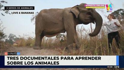 3 documentales para aprender sobre los animales