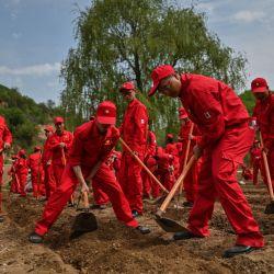 Esta fotografía tomada durante una gira de medios organizada por el gobierno muestra a los empleados de una empresa petrolera que llegaron a esta zona rural para plantar calabazas en Nanniwan, a unos 60 kms de Yan'an, la sede del Partido Comunista Chino de 1936 a 1947, en la provincia de Shaanxi.   Foto:Hector Retamal / AFP