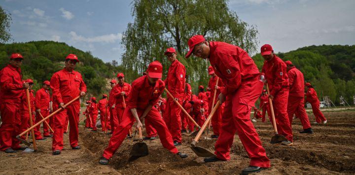 Esta fotografía tomada durante una gira de medios organizada por el gobierno muestra a los empleados de una empresa petrolera que llegaron a esta zona rural para plantar calabazas en Nanniwan, a unos 60 kms de Yan'an, la sede del Partido Comunista Chino de 1936 a 1947, en la provincia de Shaanxi.