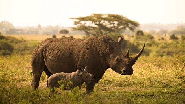 rinocerontes g_20210512
