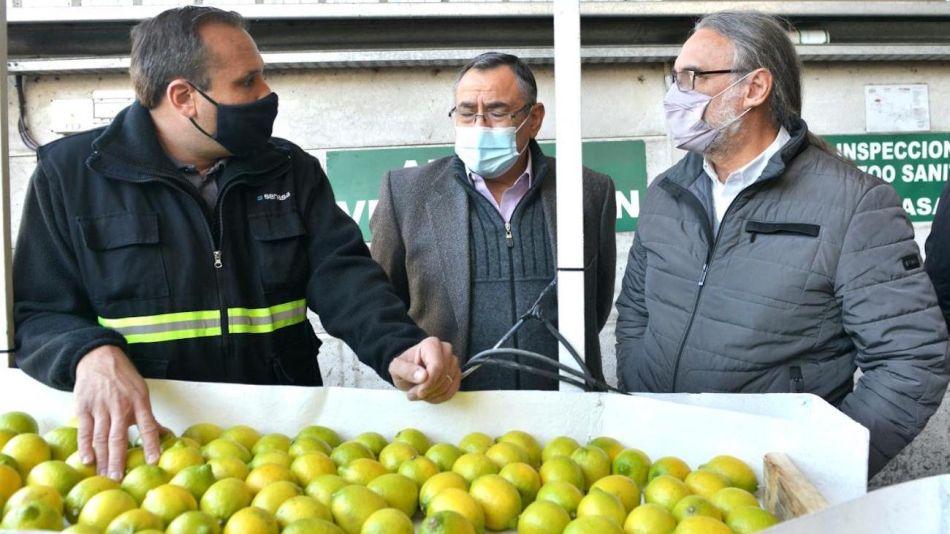 Certificación de limones para exportar a la UE