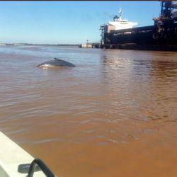 La ballena fue vista cerca del mediodía del pasado miércoles.