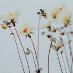 Tips para cuidar flores.