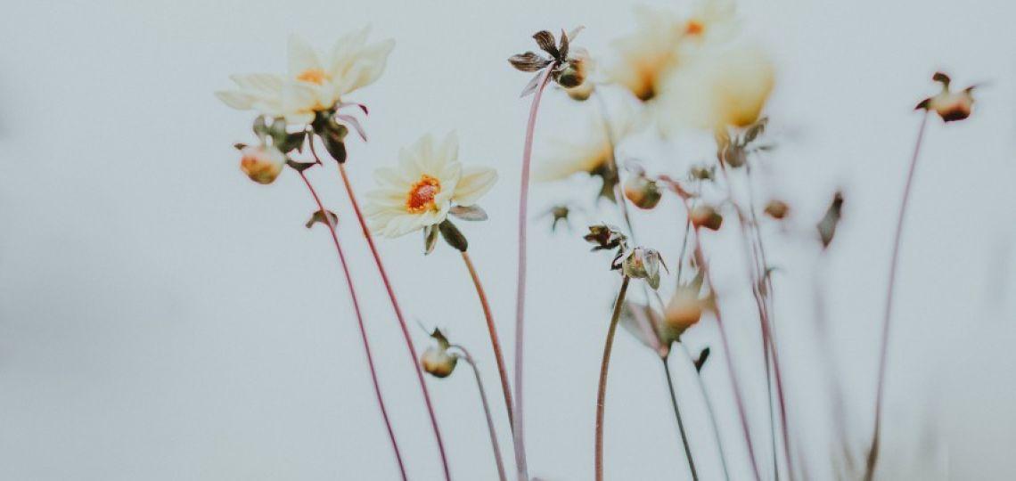 Flores de invierno: Tips para mantenerlas frescas por más días
