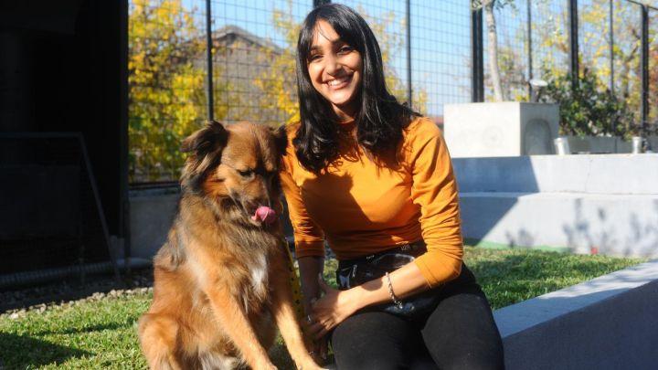 ¿Hasta qué edad puedo enseñarle educación canina a mi perro?