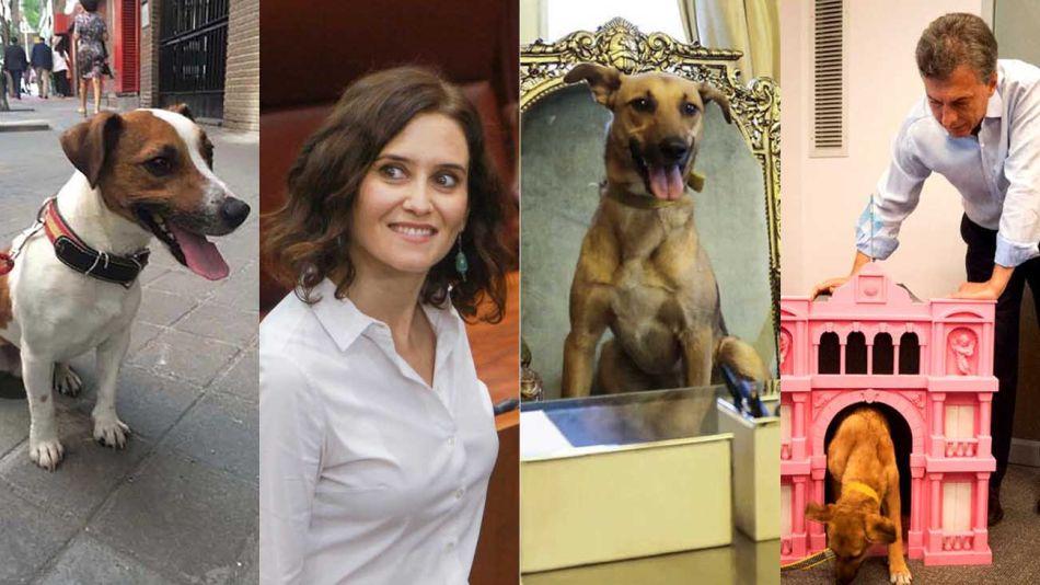 Marketing mascota. El perro Picas de la ex presidenta de Madrid, su sucesora: Ayuso, y el perro del PRO.