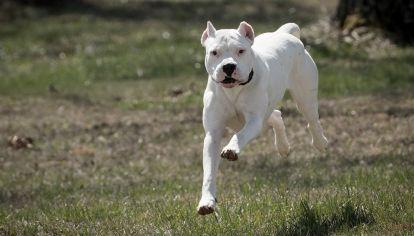 0517_perros