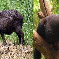 Se trata de dos especies de las cuales no se tenían datos sobre su existencia en la provincia.