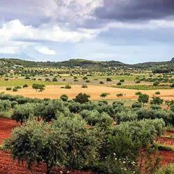 Ibiza es un destino soleado que tiene una oferta de playas y espacios verdes para ofrecer al turismo.