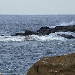 El hallazgo tuvo lugar, en el océano Pacífico, a la altura de Chile.