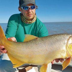 Uno de los buenos dorados logrado con posta de sábalo fresco. Pescar al garete o anclado es la decisión más difícil que debemos tomar. Cuidemos el recurso: pesca y devolución.