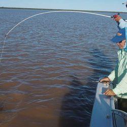 Mientras uno lo arrima, el otro pescador está atento para izarlo a bordo.