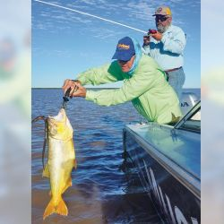 Dorado que picó con un plomito corredizo de 15 g y anguila viva como carnada.