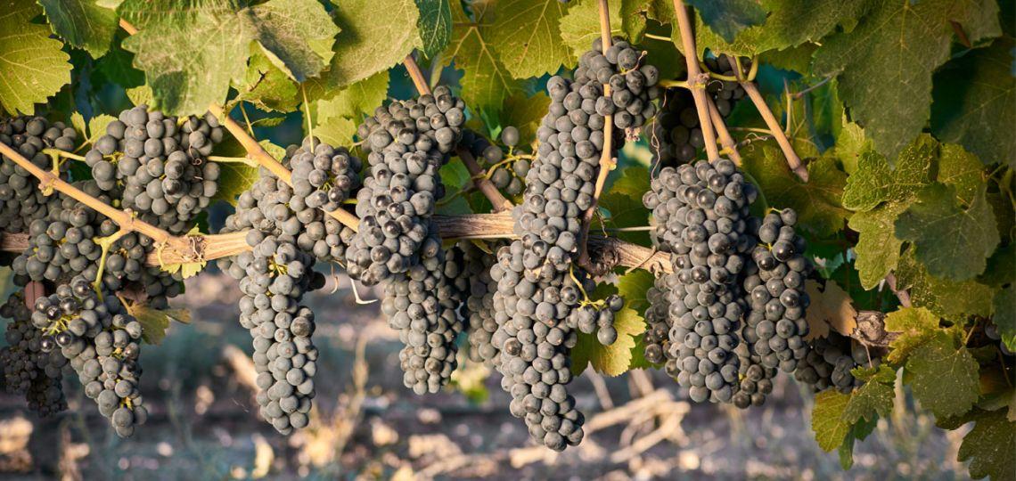 Descubrí cuales son los vinos del principio al fin del mundo