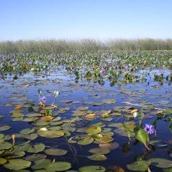 Las intervenciones humanas siguen su curso, poniendo así en peligro tanto a la flora y a la fauna, como así también a los humedales.