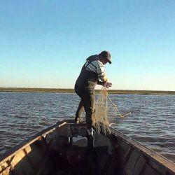 Según los especialistas, la presión o el estrés que están sufriendo los peces es grande.