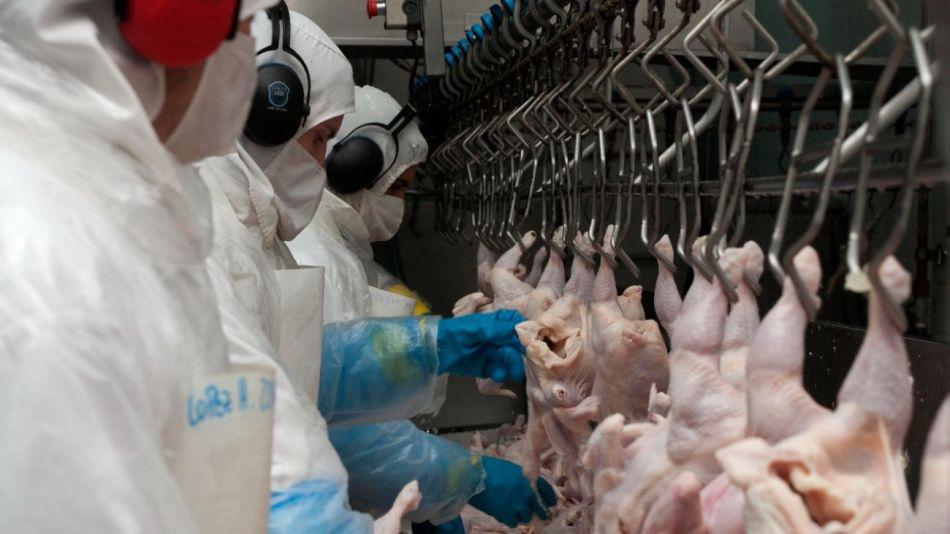Argentina vuelve a exportar carne aviar a la UE