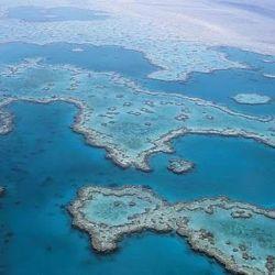 Los arrecifes de coral son formaciones de organismos marinos invertebrados.