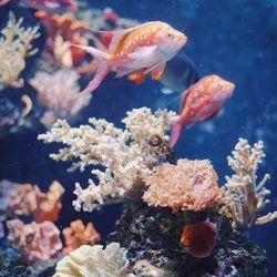 El objetivo de esta fecha es concientizar a las personas acerca de los serios riesgos que afrontan estos ecosistemas marinos.