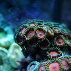 Durante esta fecha, se expone con mayor énfasis la problemática del desgaste de los arrecifes.
