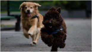 perros asistencia 02062021