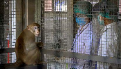 Testeos de vacunas en animales.