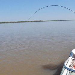 La pesca comercial durante los días viernes, sábados, domingos y feriados estará totalmente prohibido en todo el territorio santafesino.