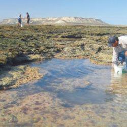 La investigación determinó que el método de extracción comenzó en la década de 1920, en las costas del Golfo San Matías