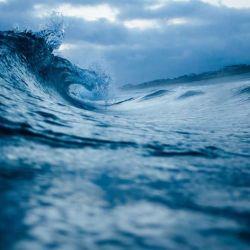 La humanidad cuenta con tan solo una década para salvar tanto al océano como a las especies que habitan en él.