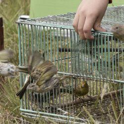 63 ejemplares de aves vivas fueron trasladadas a la Fundación Temaikén para su rehabilitación.
