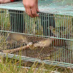 68 aves fueron derivadas al Centro de Rescate de la Reserva Ecológica Costanera Sur.