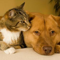 Por el momento, los paradores españoles solo aceptan gatos y perros de determinada raza y tamaño.
