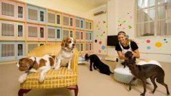 España ya cuenta con 31 paradores que aceptan mascotas