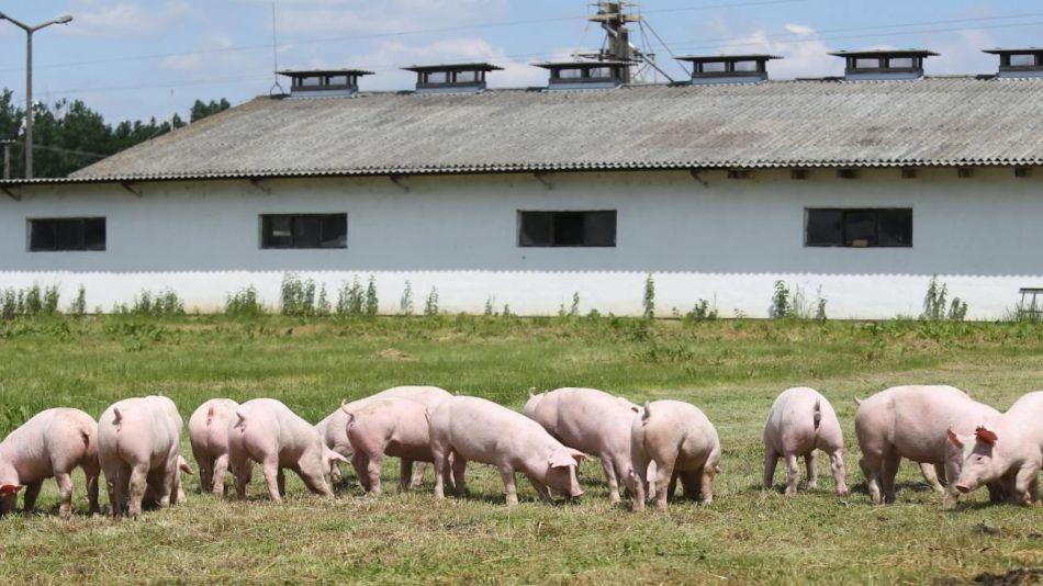 Granjas de cerdo europeas