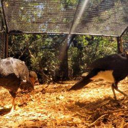 Tres de estas aves provienen del Complejo Ecológico Sáenz Peña, ubicado en la provincia de Chaco.