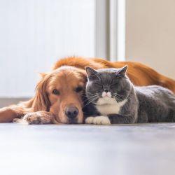 Los perros y los gatos pueden llevarse a las mil maravillas.