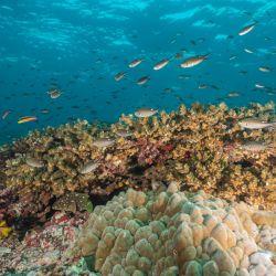 Es la tercera reserva marina más grande del Pacífico tropical.