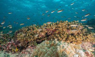 Panamá creó una reserva marina casi tan grande como su territorio