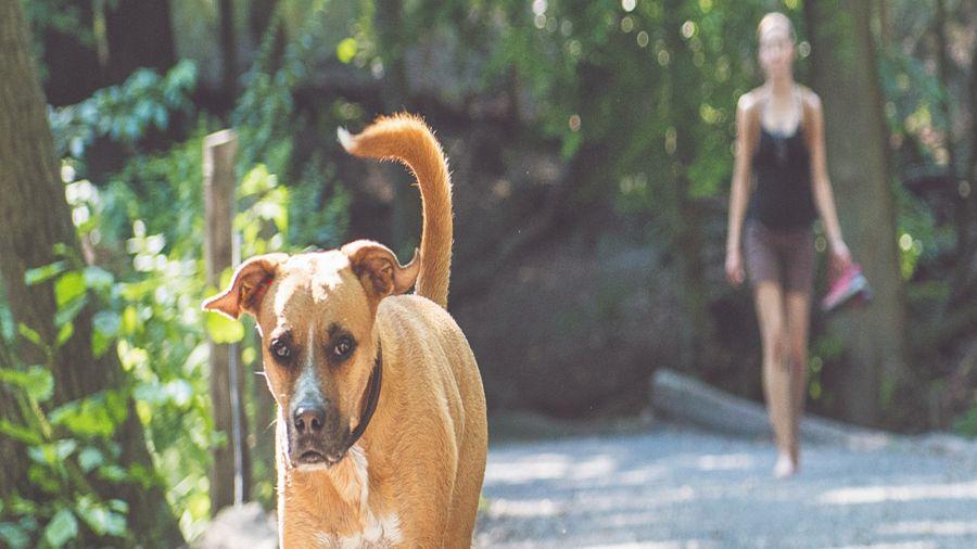 Correr por temor ante un perro es desaconsejable: el animal podría interpretarlo como una invitación a jugar.