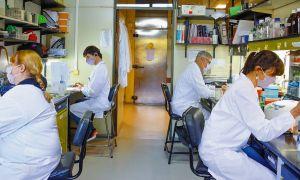 Ciencia. La vacuna de segunda generación está en la etapa de ensayos clínicos.