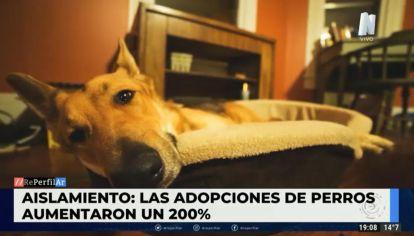 Aumentó un 200% la adopción de perros