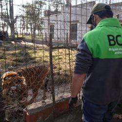 Los animales rescatados estaban en cautiverio, en malas condiciones.