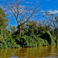 El Parque Nacional Pre-Delta fue creado el 12 de diciembre de 1991, mediante la Ley N° 24063/91 aprobada por el Congreso Nacional.