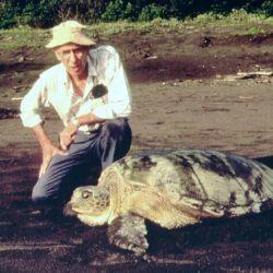 El ecologista y conservacionista norteamericano Archie Fairly Carr luchó toda su vida por el mantenimiento de las poblaciones de tortuga, principalmente en Costa Rica.